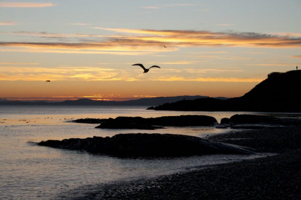 Silhouette of a seagull flying in the sunset by a beach